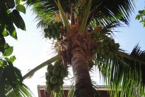 palmtrees-hotel-sunhill-patong